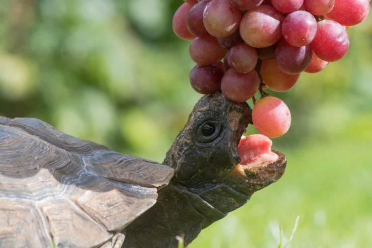 snack alla tartaruga