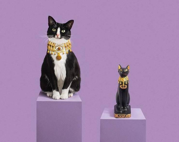 gatto egitto storia