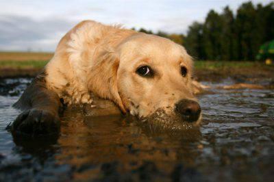 cane sporco fango