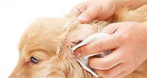 come disinfettare pelo cane