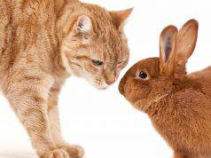 coniglio cibo gatti