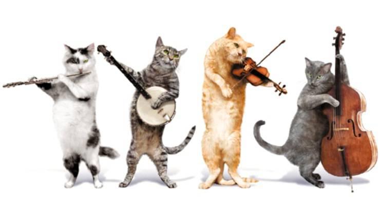 gatti animali musica