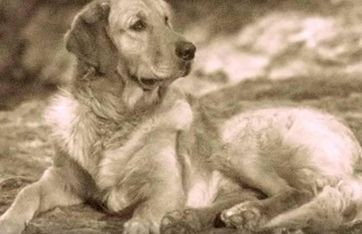 cani estinti Tracker russo