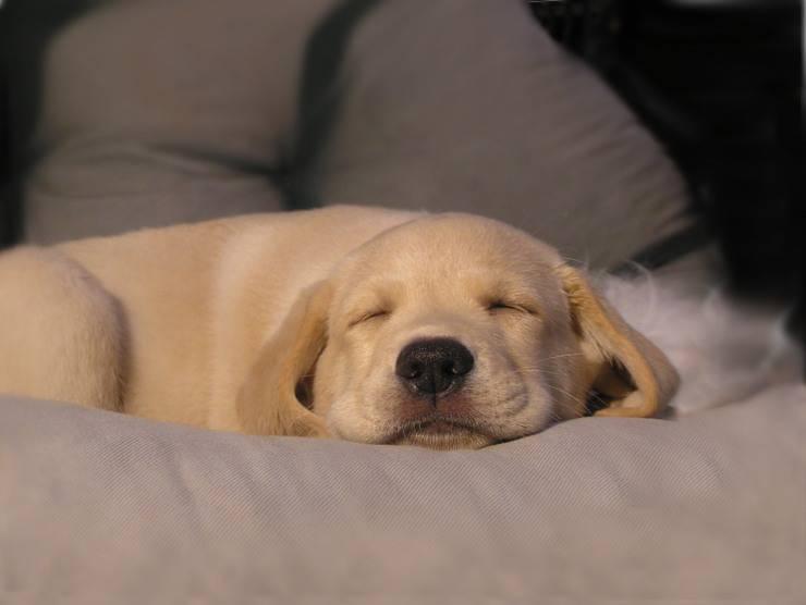 significato cane sogno