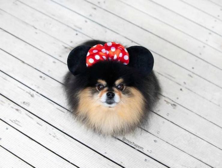 Il cane con il fiocco (Foto Instagram)