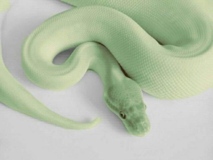 serpe rettile serpente