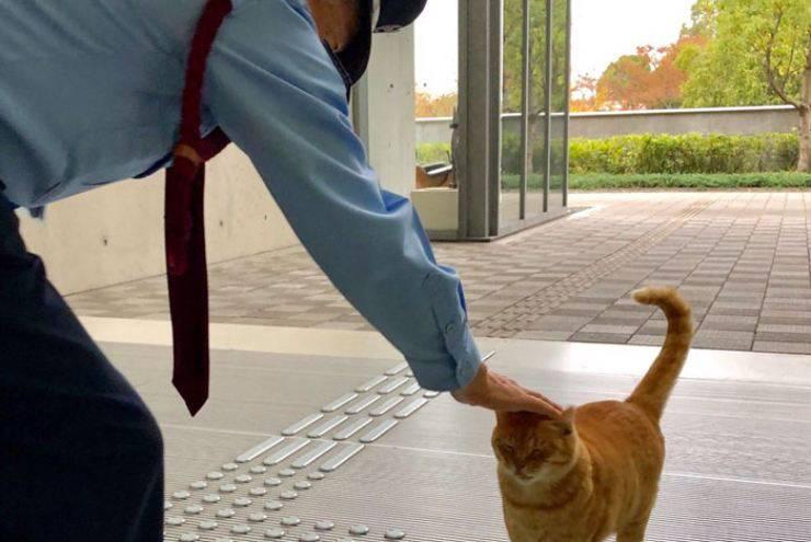 gatti entrare museo