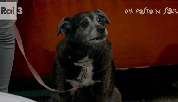cane di Un posto al Sole