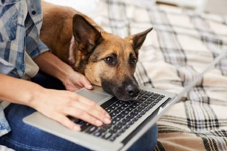 gestire cane in casa