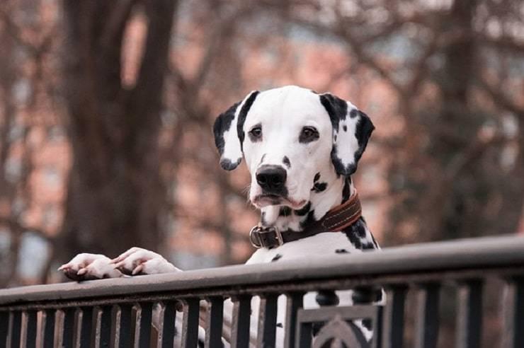 Cani meno adatti