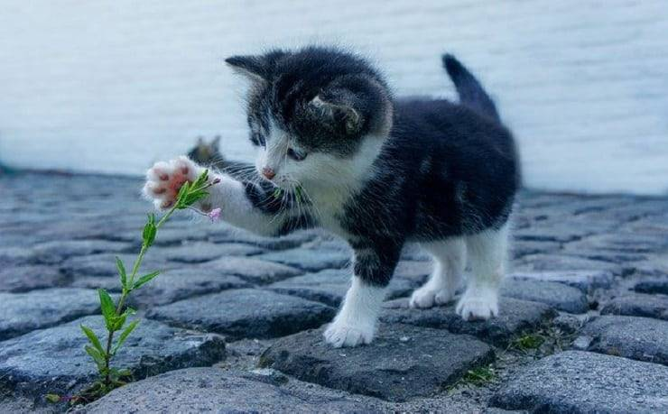 gatto calzini bianchi