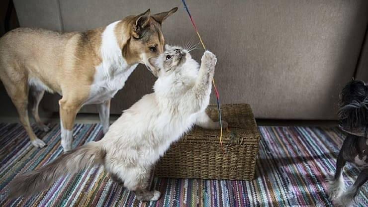 capacità gatti