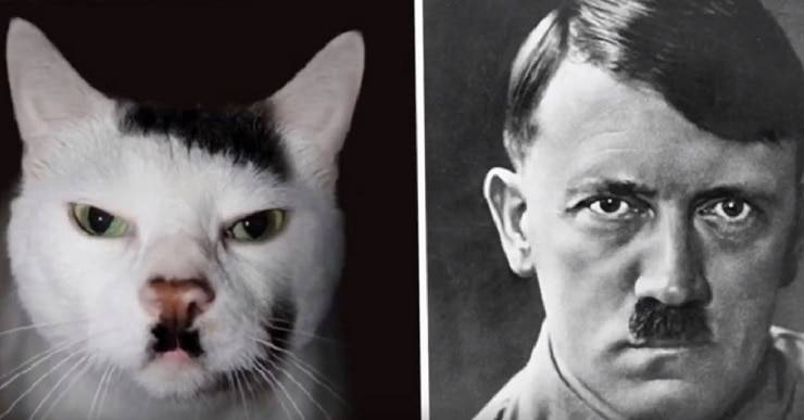 gatti somiglianti