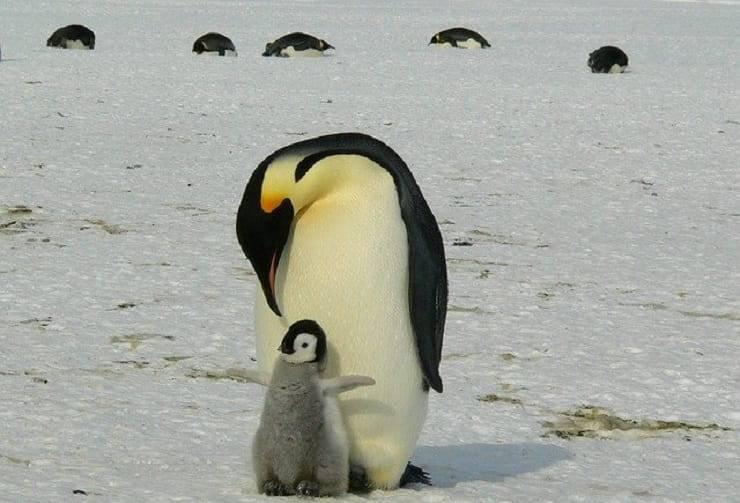 papà in natura