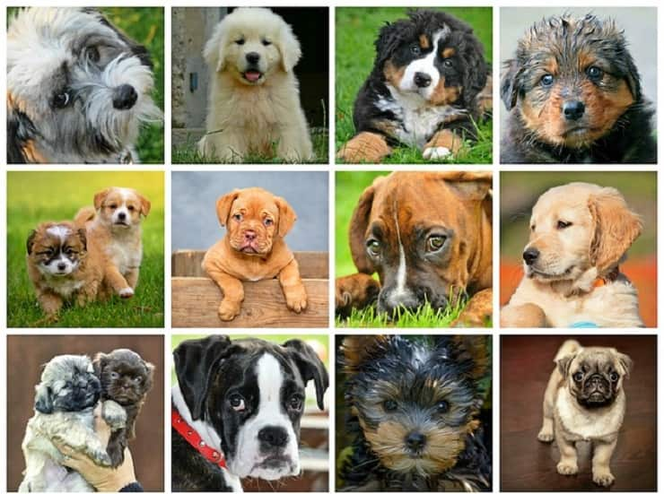 cane giusto segno zodiacale