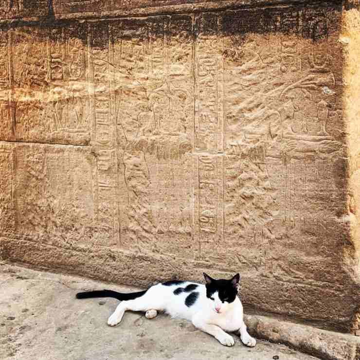 gatti antico egitto