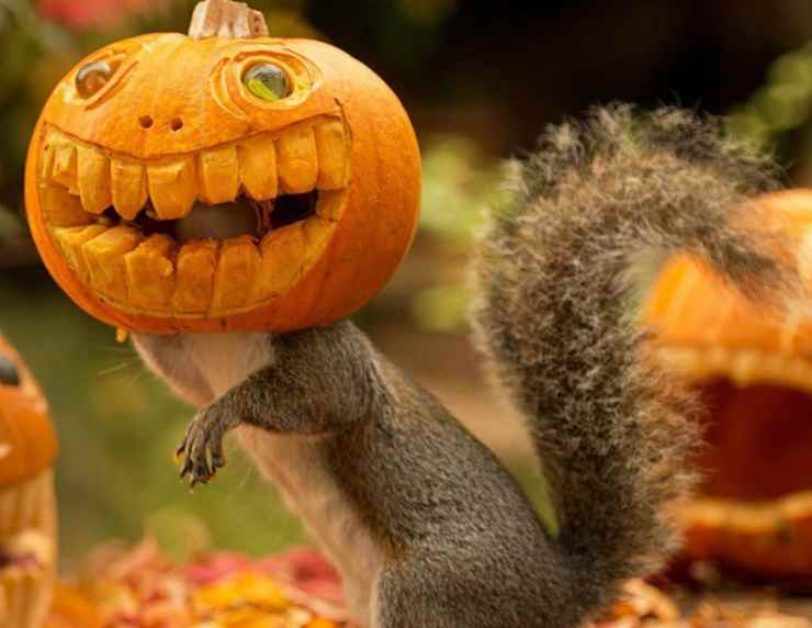 Lo scoiattolo e la zucca di Halloween (Foto Facebook)