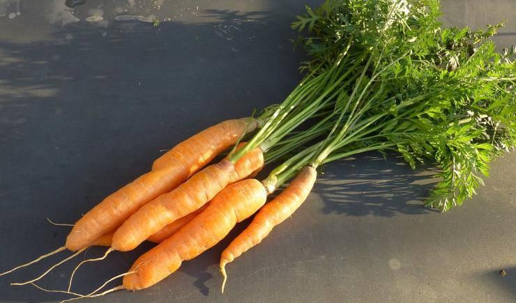 carote verdura vegetali