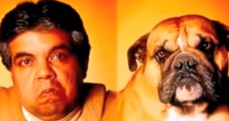 bulldog padrone