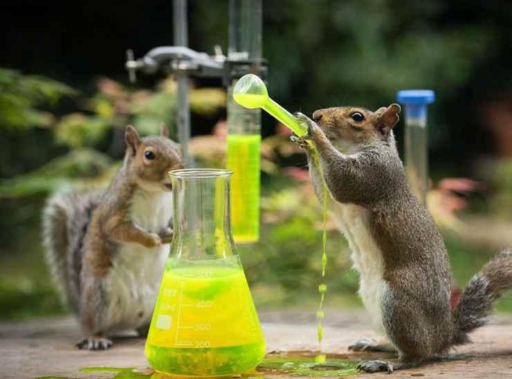 Gli scoiattoli e la pozione (Foto Facebook)
