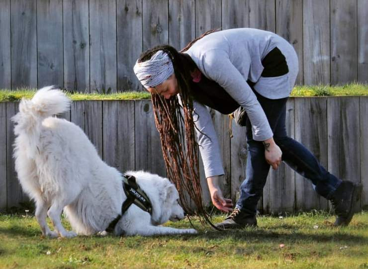 cani con disabilità