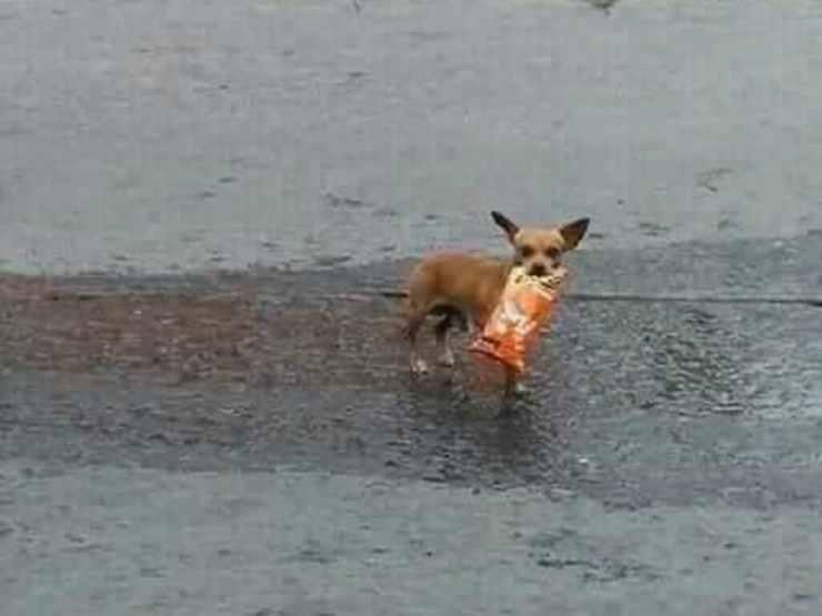 Il cane e il pacchetto tra i denti (Foto Facebook)