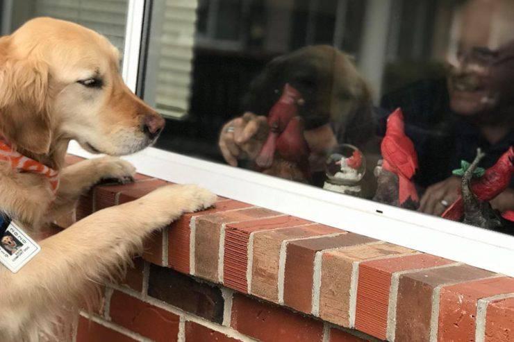 cane aiuto casa riposo
