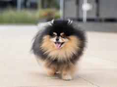 Il cane talentuoso (foto Instagram)
