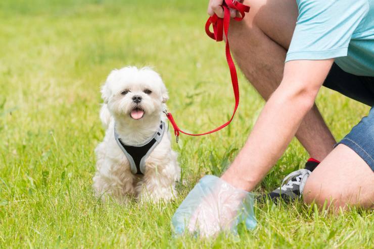 raccogliere cacca cane
