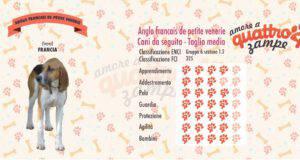 Anglo Francais de Petite Venerie scheda razza