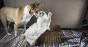 capacità dei gatti
