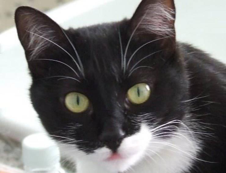 gatto contro siringa foto