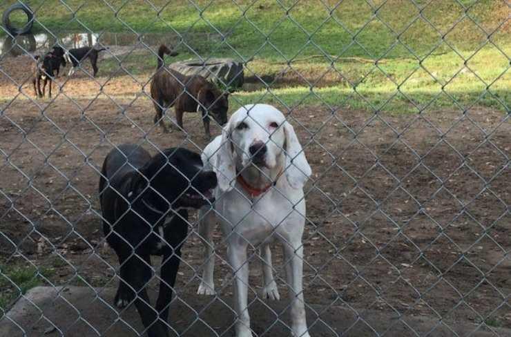 cane scappa via proprietari