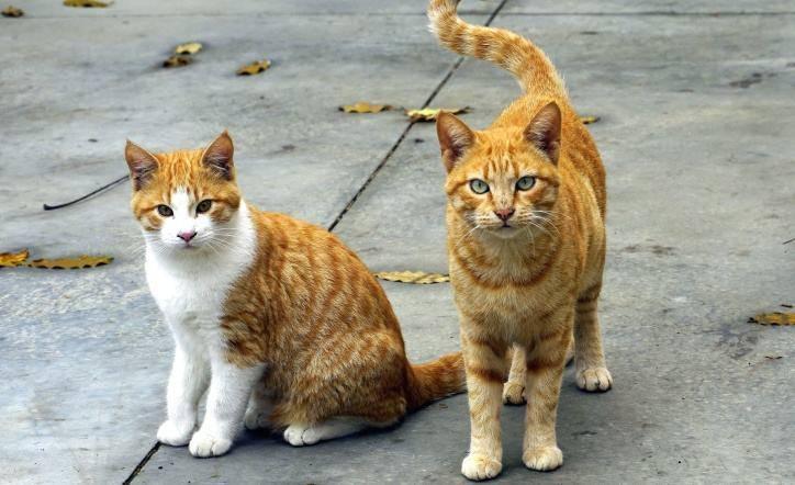 spariti quindici gatti denuncia
