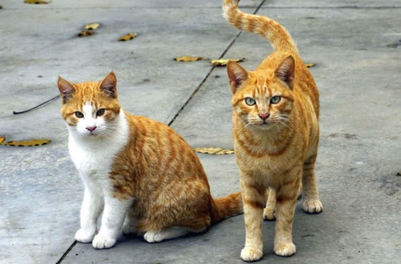 spariti quindici gatti colonia denuncia