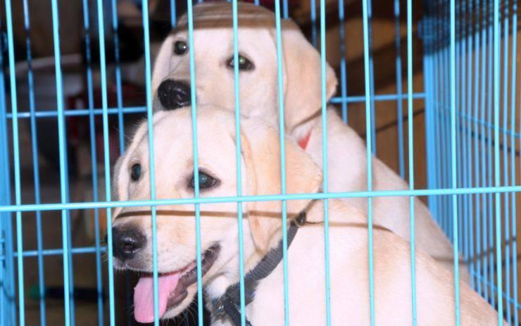 Italia Zona Rossa affido adozione cane gatto