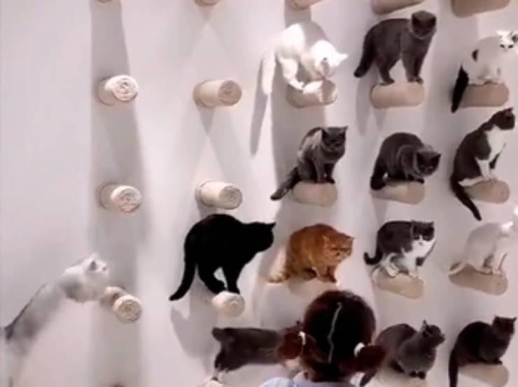 gatti virali