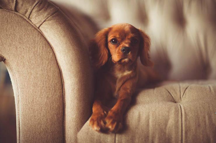 cane con sguardo fisso