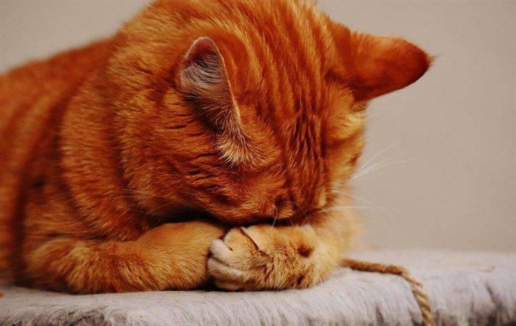 gatto parassiti primavera