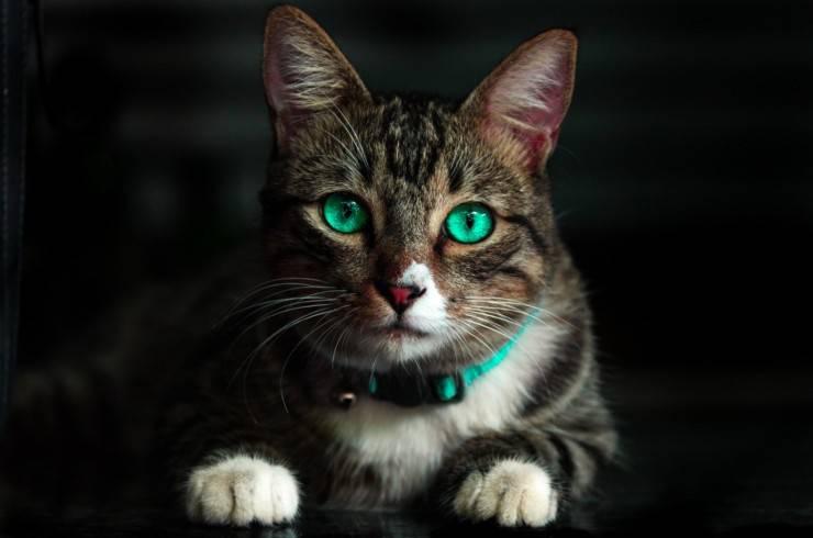 gatti non sentono dolce