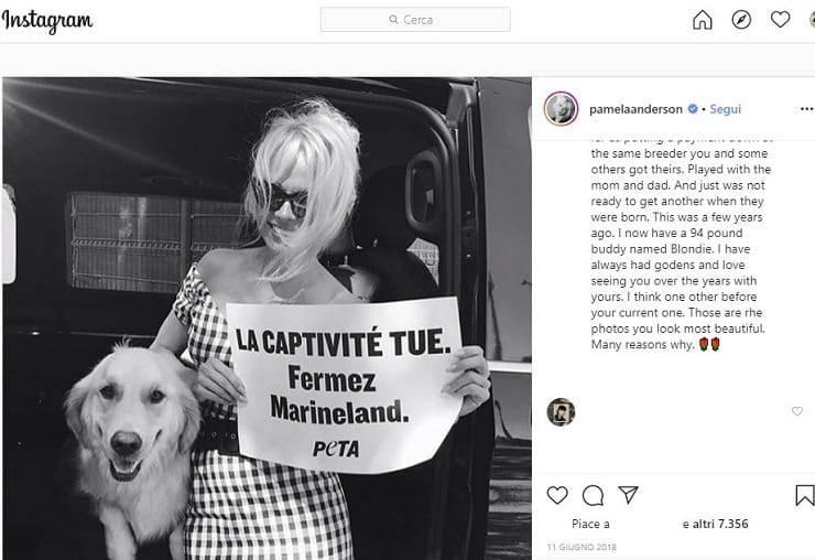 festa della donna 2020 Pamela Anderson