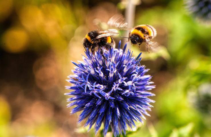ecologia ape fiori