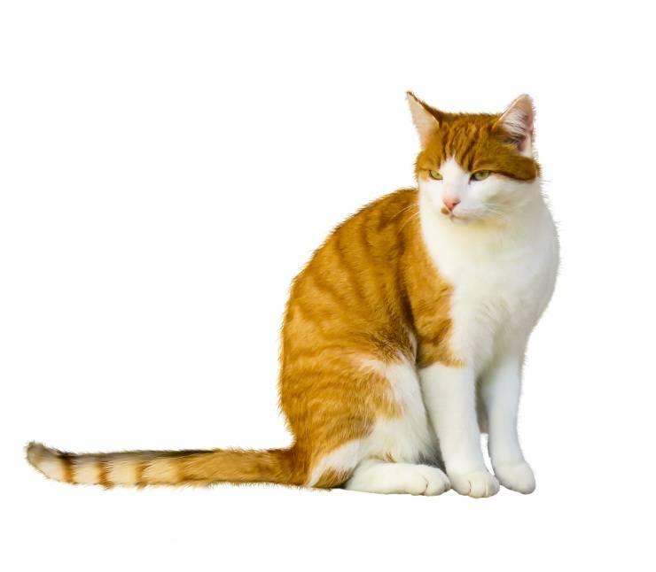 La coda del gatto