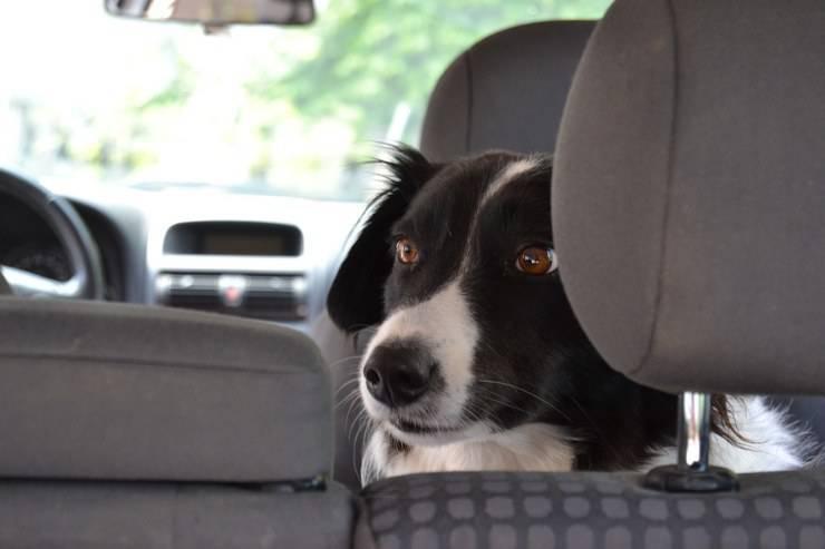 cane lasciato auto