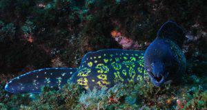 pesce murena mare