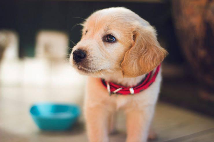 come addestrare cane