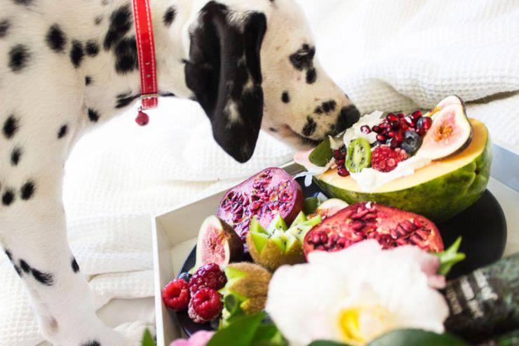 dalmata cane frutta