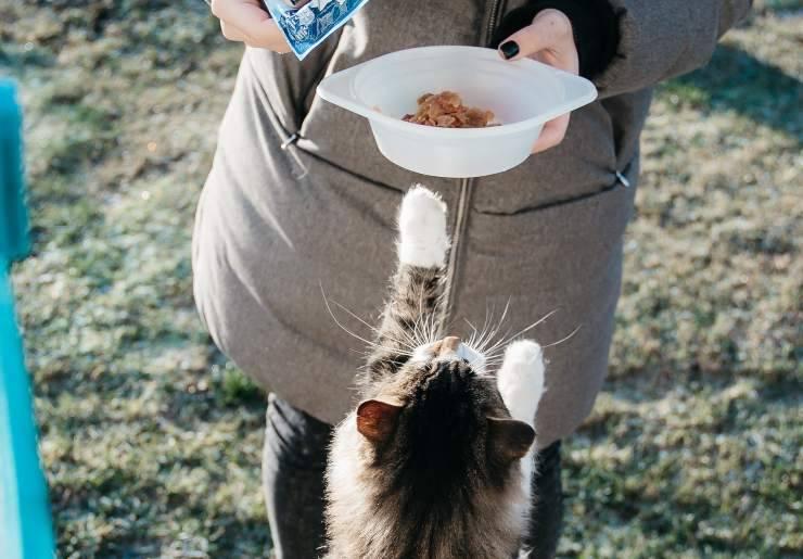 Cosa non dare da mangiare al cucciolo