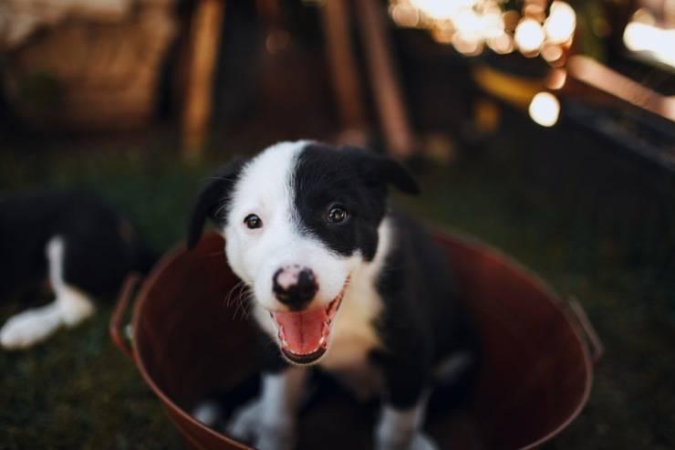 prima adottare cane