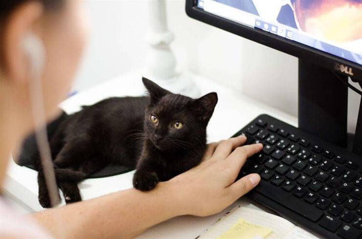 gatto comunica linguaggio